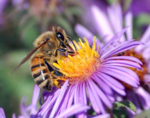 emf kills bees