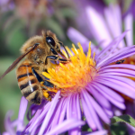 EMF Kills 7 Billion Bees Destroying Your Immune System